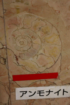 Ammonite in department store stairwell --
