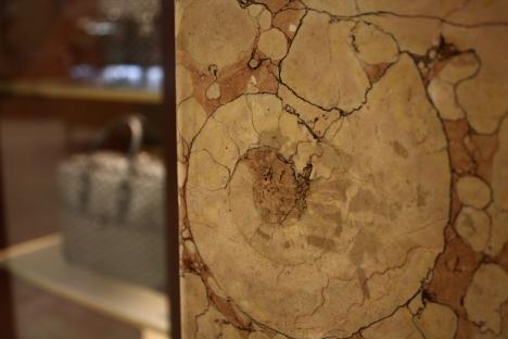 Ammonite in Takashimaya stairway --