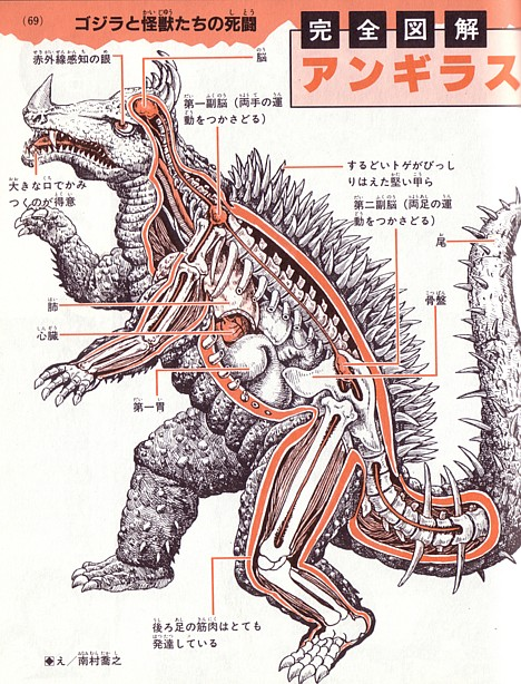 Anatomy of Anguirus --