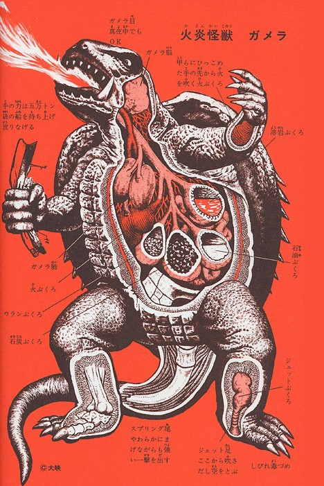 Anatomy of Gamera --