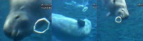 Nana the beluga blows bubbles --