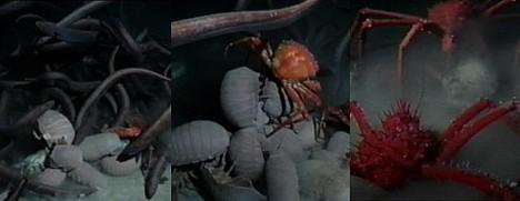 Deep-sea feeding frenzy ---