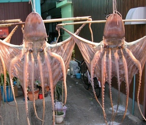 Dried octopus -- 