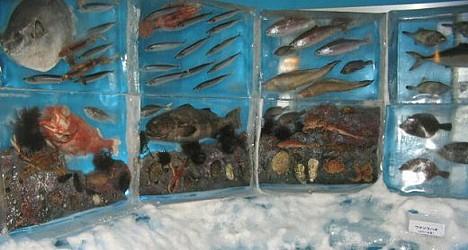 Ice Aquarium ---