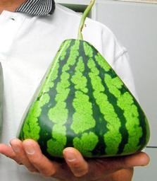 Pyramid-shaped watermelon