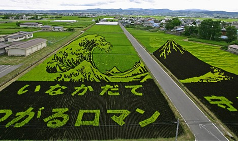 Rice field art --