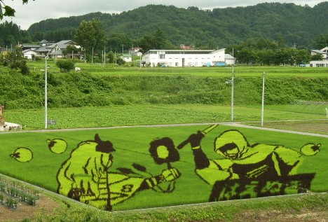Rice field art ---