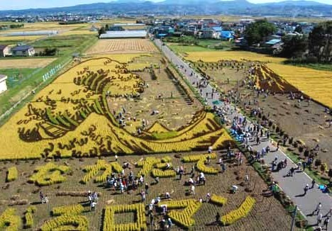 Art rice harvest --