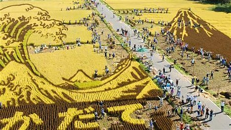 Art rice harvest --