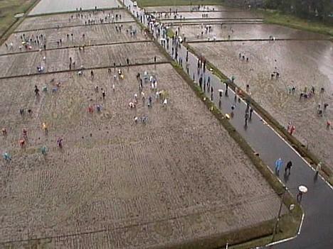 Inakadate rice paddy art, 2008 --