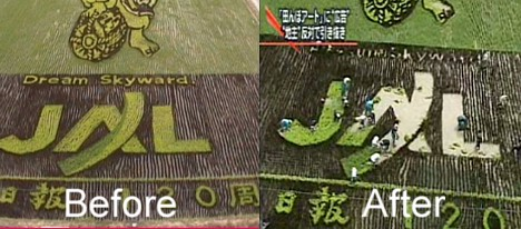 Workers remove JAL logo from rice paddy art --
