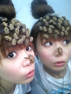 Shokotan wearing empty locust shells --
