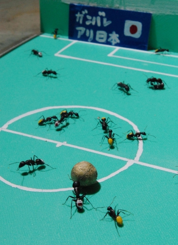 Ants playing soccer