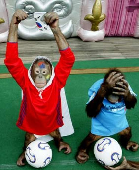 Orangutan playing soccer