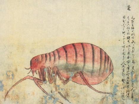 Insect sketch, 顕微鏡虫之図 --