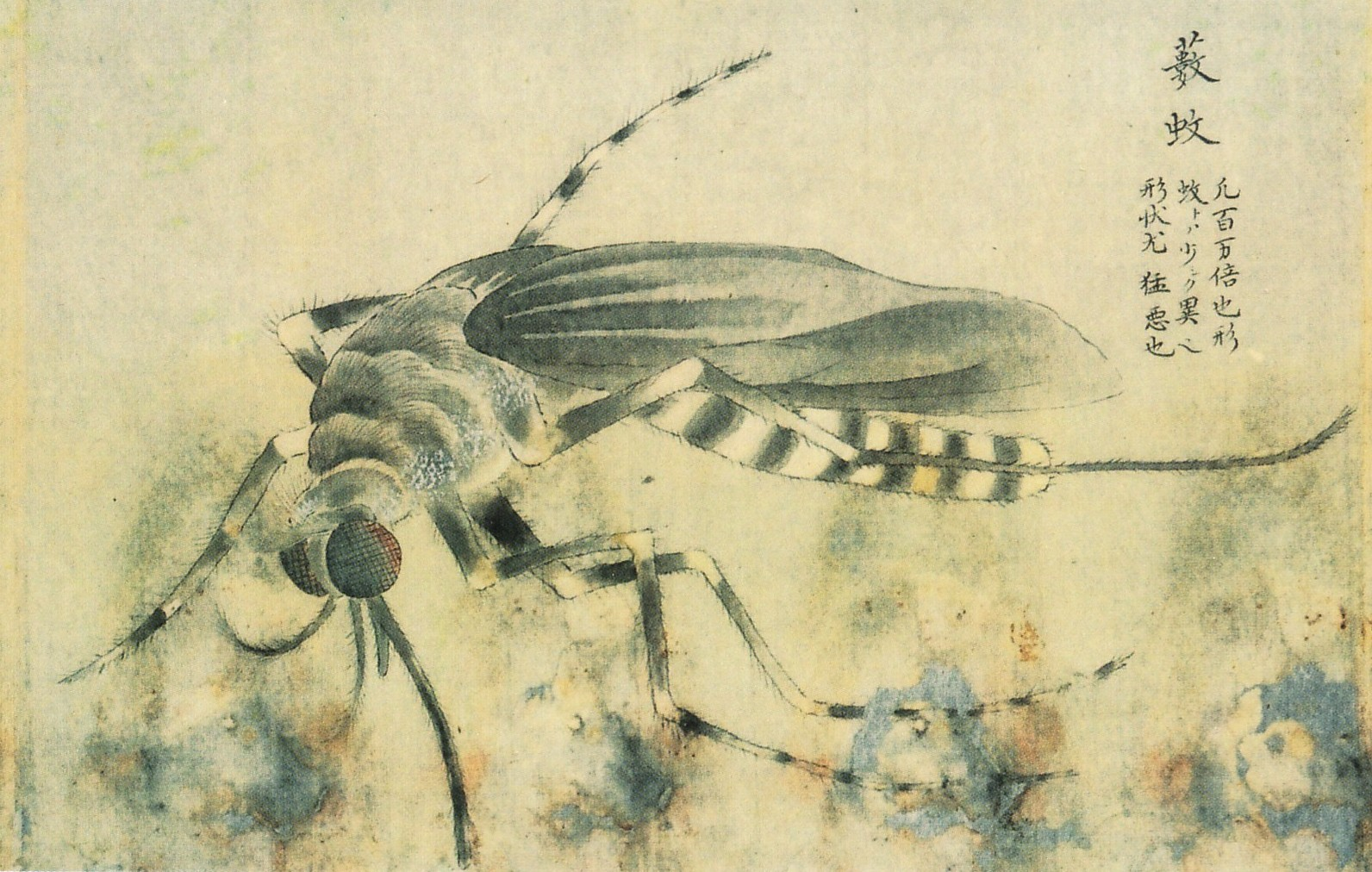 Vintage Insect 59