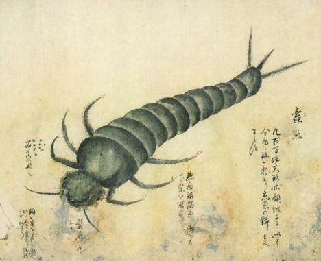 Insect sketch, Kenbikyo Mushi No Zu --