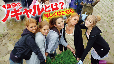 Nogal, Shibuya rice --