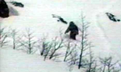 Abominable snowman, bigfoot, sasquatch --