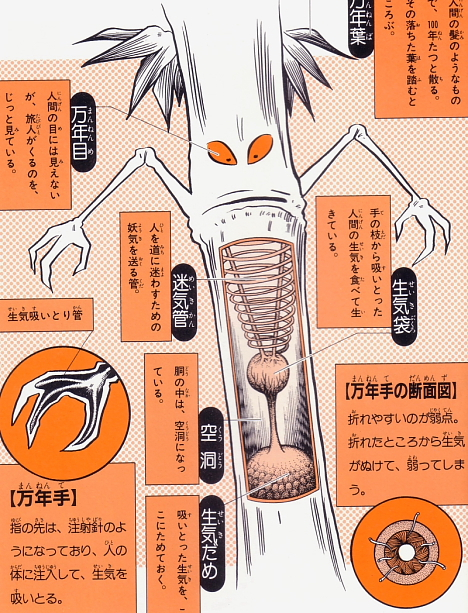 Mannendake anatomical illustration from Shigeru Mizuki's Yokai Daizukai -- 
